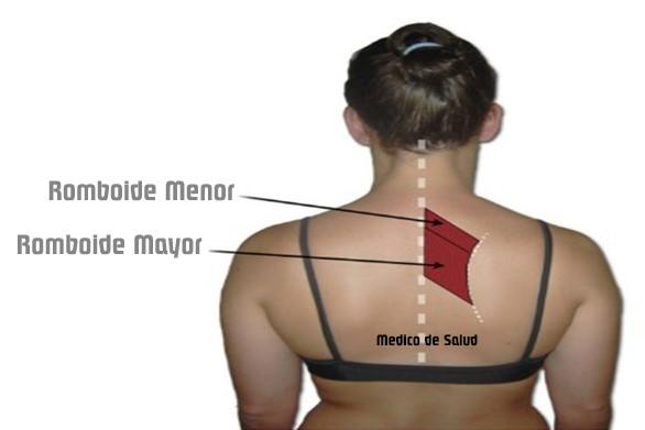 Cómo tratar el dolor muscular romboidal cómo tratar el dolor muscular romboidal Cómo tratar el dolor muscular romboidal Screenshot 27 2