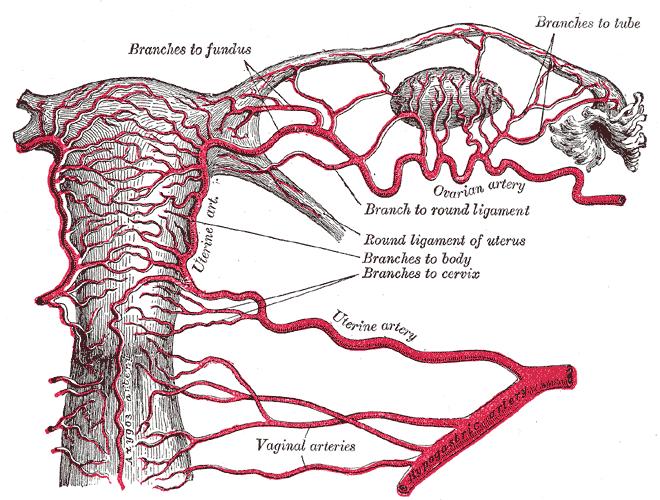 Torsión ovárica